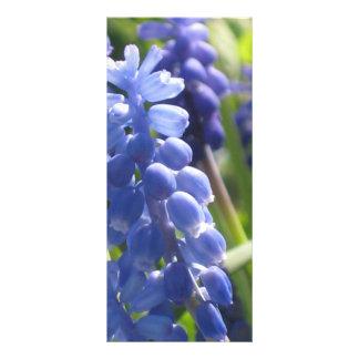 Rack Card - Grape Hyacinth
