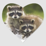 Racoon Babies Heart Stickers