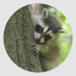 Racoon Baby Stickers