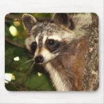 "Racoon ""Bandit"" Mousepad"