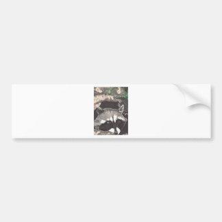 Racoon Car Bumper Sticker
