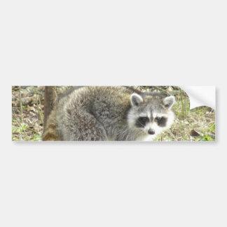 Racoon Bumper Sticker