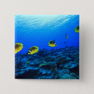 Racoon Butterflyfish Chaetodon lunula), North 15 Cm Square Badge