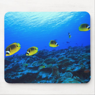 Racoon Butterflyfish Chaetodon lunula), North Mouse Mat