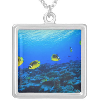 Racoon Butterflyfish Chaetodon lunula), North Silver Plated Necklace