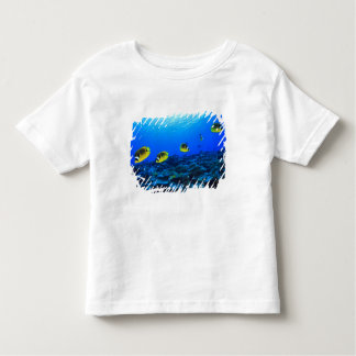 Racoon Butterflyfish Chaetodon lunula), North Toddler T-Shirt