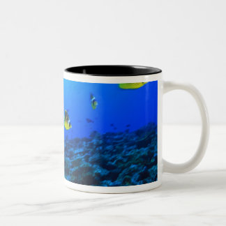 Racoon Butterflyfish Chaetodon lunula), North Two-Tone Coffee Mug