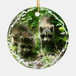 Racoon Habitat Ornament