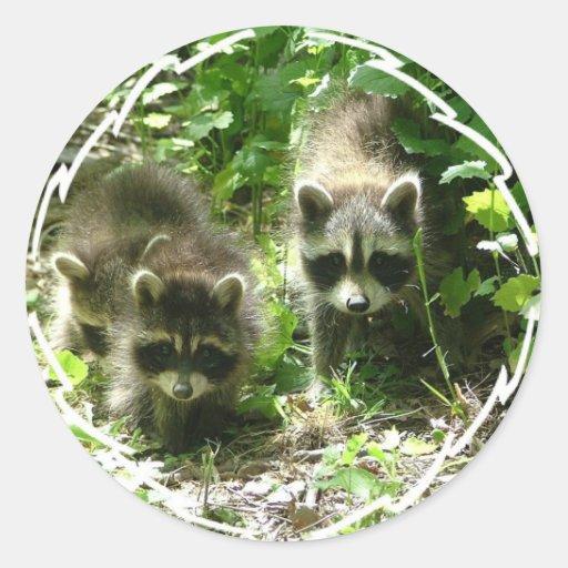Racoon Habitat Stickers