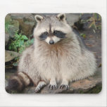 Racoon Mouse Pad