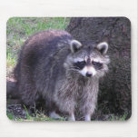 Racoon - mouse pad