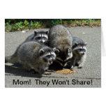 Racoon Mum & Babies