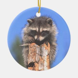 Racoon on Stump Ornament