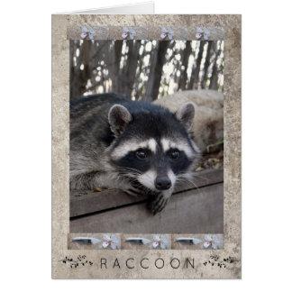 Racoon Portrait Card