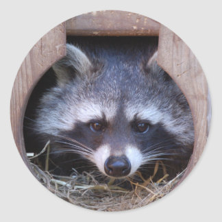 RACOON RACCOON by Jean Louis Glineur Classic Round Sticker