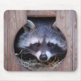 Racoon raccoon mouse mat