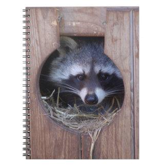 RACOON RACCOON - photo: Jean Louis Glineur Spiral Notebook