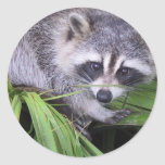 Racoon Stickers