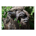Racoon - The Three Amigos Greeting Card