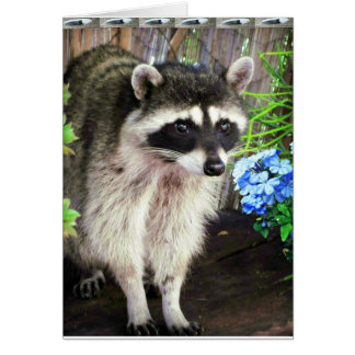 Racoon With Blue Flowers And Feathers Card