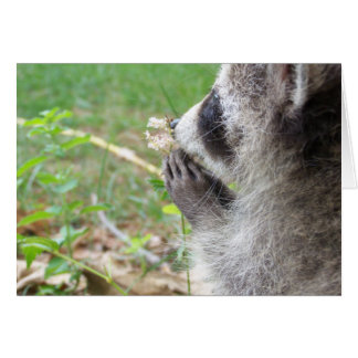 Racoon with flower notecard