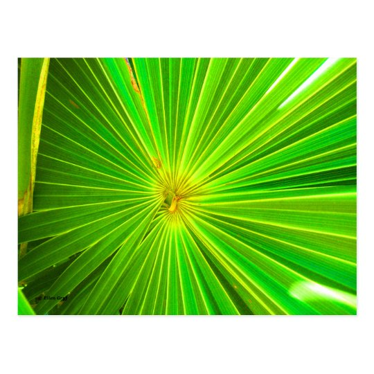 Radial Palm Leaf, Tulum Postcard