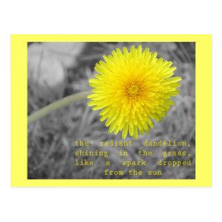 Radiant Dandelion Postcard