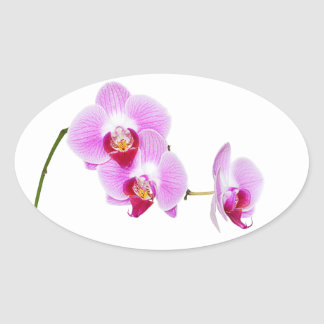 Radiant Orchid Closeup Photograph Oval Sticker
