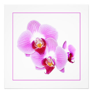 Radiant Orchid Closeup Photograph