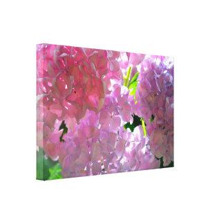 Radiant Pink Hydrangeas Canvas Print