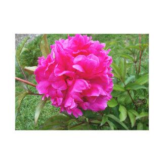 Radiant Pink Peony Canvas Print