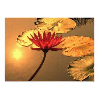Radiant Water Lily with the Sun Reflecting Card