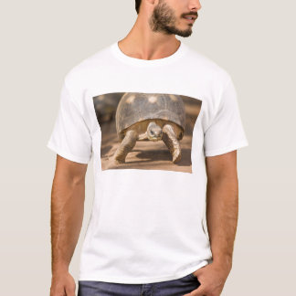 Radiated tortoise, Astrochelys radiata, with a T-Shirt