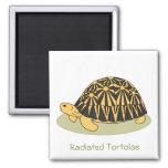 Radiated Tortoise Magnet (black)