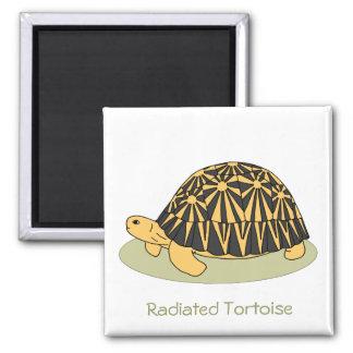 Radiated Tortoise Magnet black