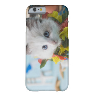 Rag Doll Kitten and Summer Vacation Barely There iPhone 6 Case