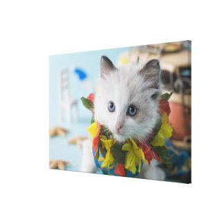 Rag Doll Kitten and Summer Vacation Canvas Print