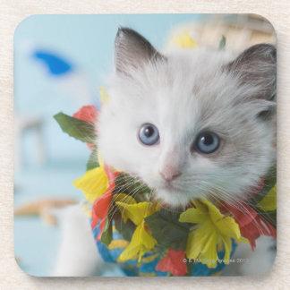 Rag Doll Kitten and Summer Vacation Coaster