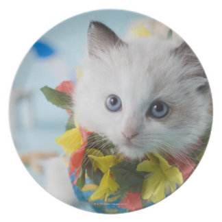 Rag Doll Kitten and Summer Vacation Plate