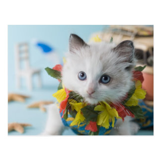 Rag Doll Kitten and Summer Vacation Post Cards