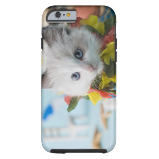 Rag Doll Kitten and Summer Vacation Tough iPhone 6 Case