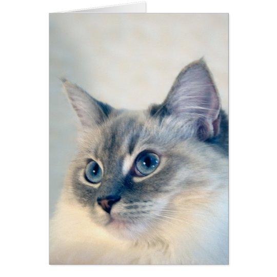 Ragdoll Cat #2018 Card
