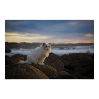 Ragdoll Cat At The Beach Poster