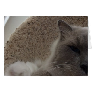 Ragdoll Cat, card
