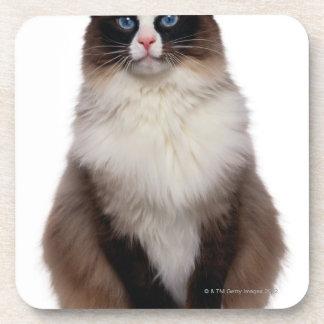 Ragdoll Cat Coaster