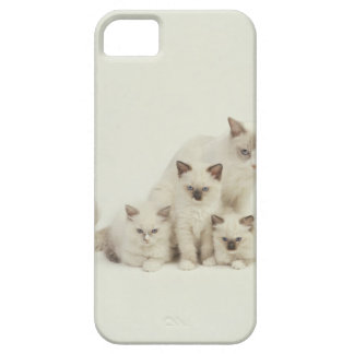 Ragdoll cat female with kittens iPhone 5 case