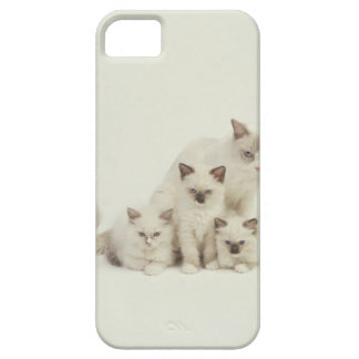Ragdoll cat female with kittens iPhone 5 cases