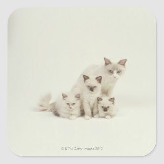 Ragdoll cat female with kittens square sticker