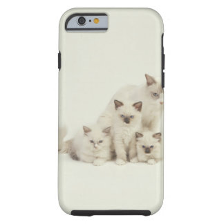 Ragdoll cat female with kittens tough iPhone 6 case