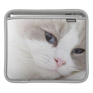 Ragdoll cat iPad sleeve